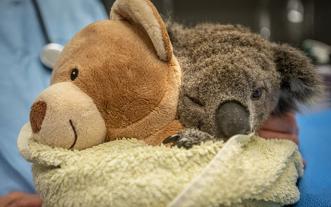 Fighting the Odds: Big-hearted helpers maintain hope in Australia