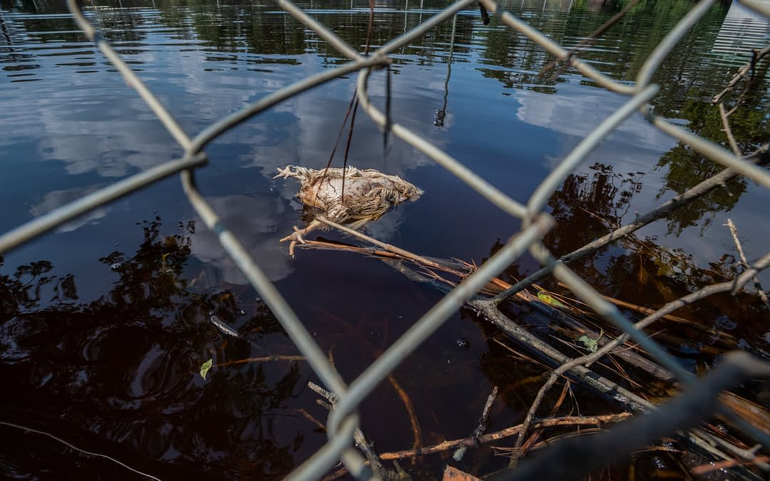 We Animals Media hits the ground to document the aftermath of Hurricane Florence.