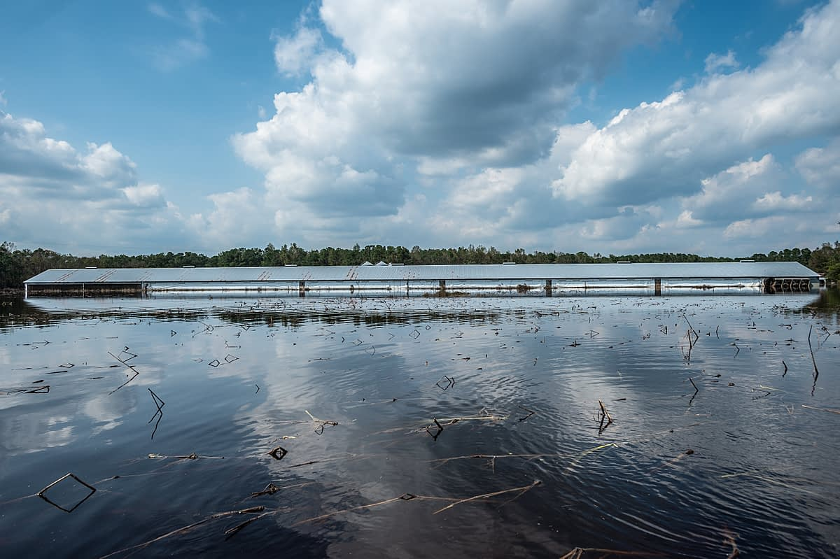 Industrial farm surrounded by flood water. USA, 2018. Jo-Anne McArthur / We Animals Media