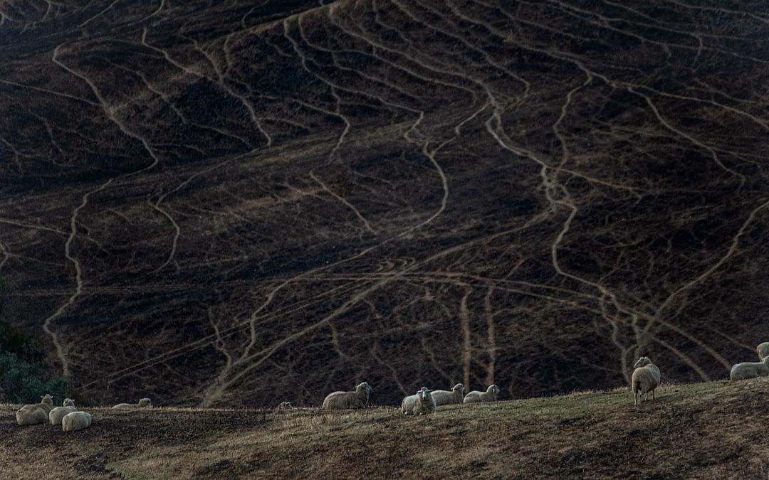 Behind the Smoke Screen: The Hidden Victims of the Australian Bushfires