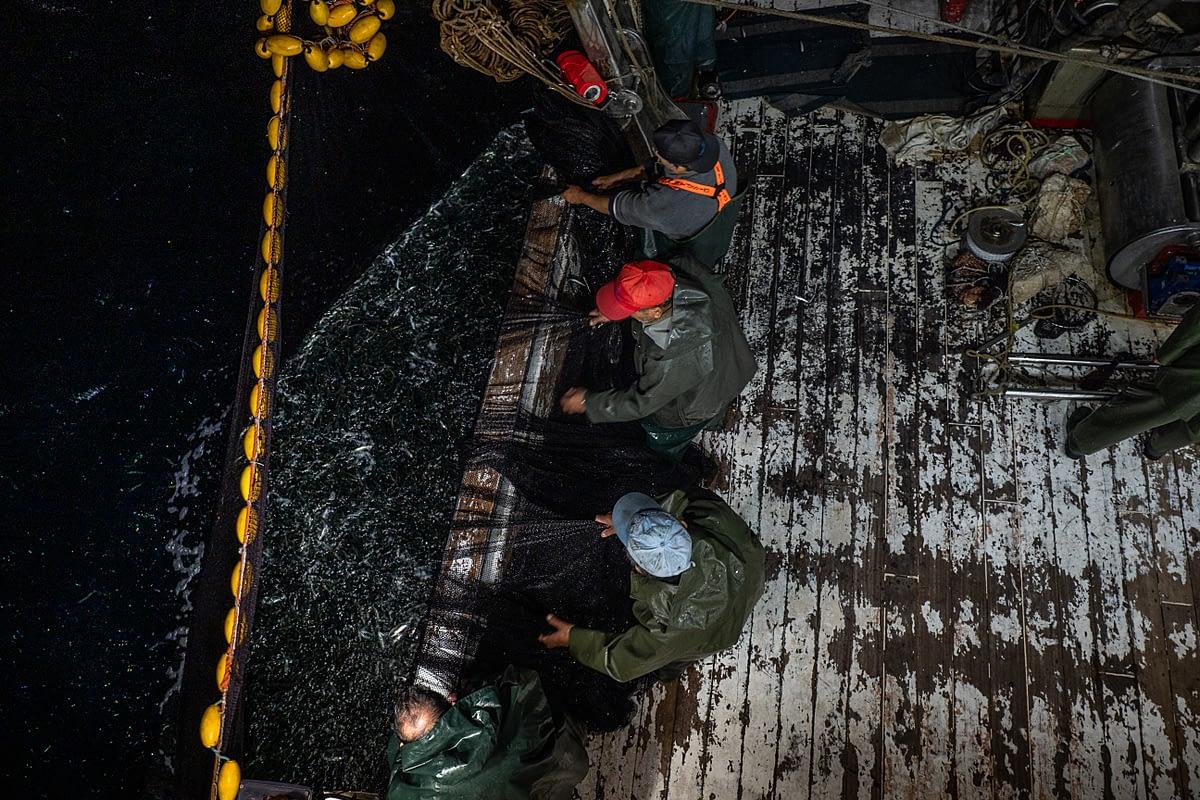 Deck crew pulls nets filled with sardines onboard the purse seine fishing boat Pandelis II. Greece, 2020. Selene Magnolia / We Animals Media
