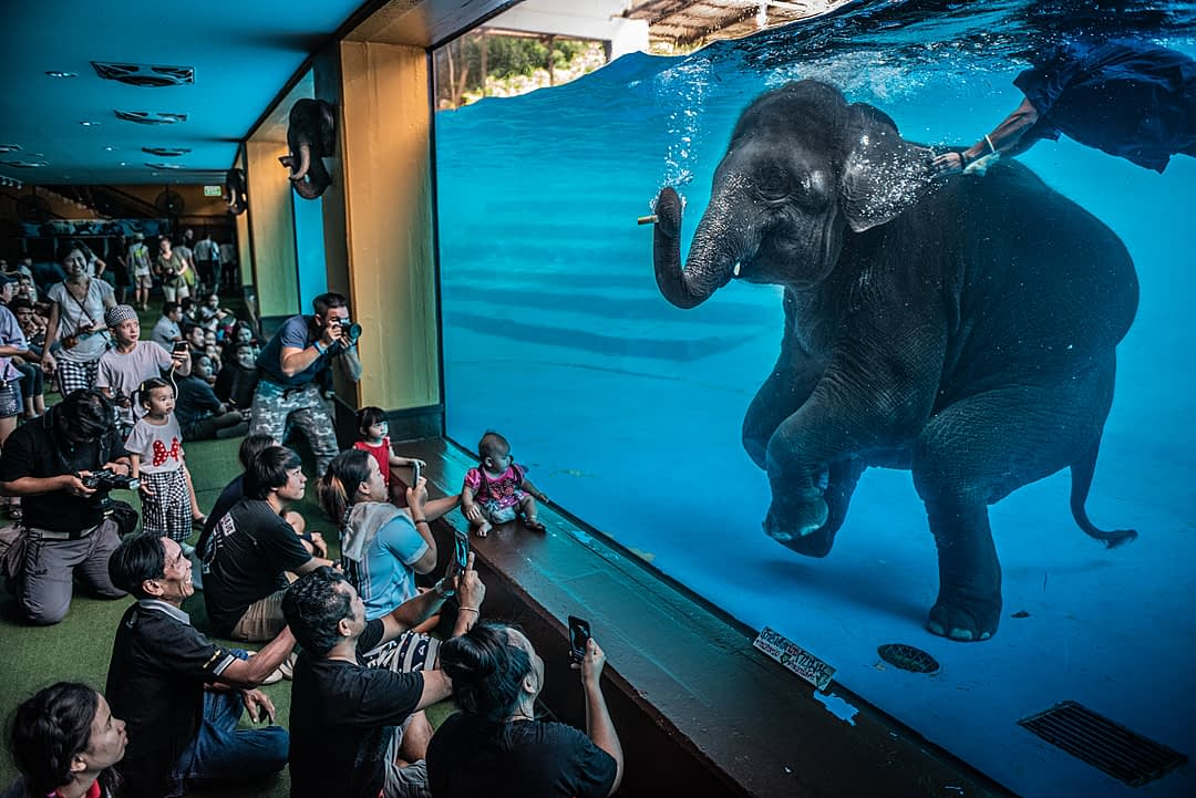 Tourists at Khao Kiew Zoo watch an Asian elephant forced to swim underwater for performances. Thailand, 2019. Adam Oswell / HIDDEN / We Animals Media