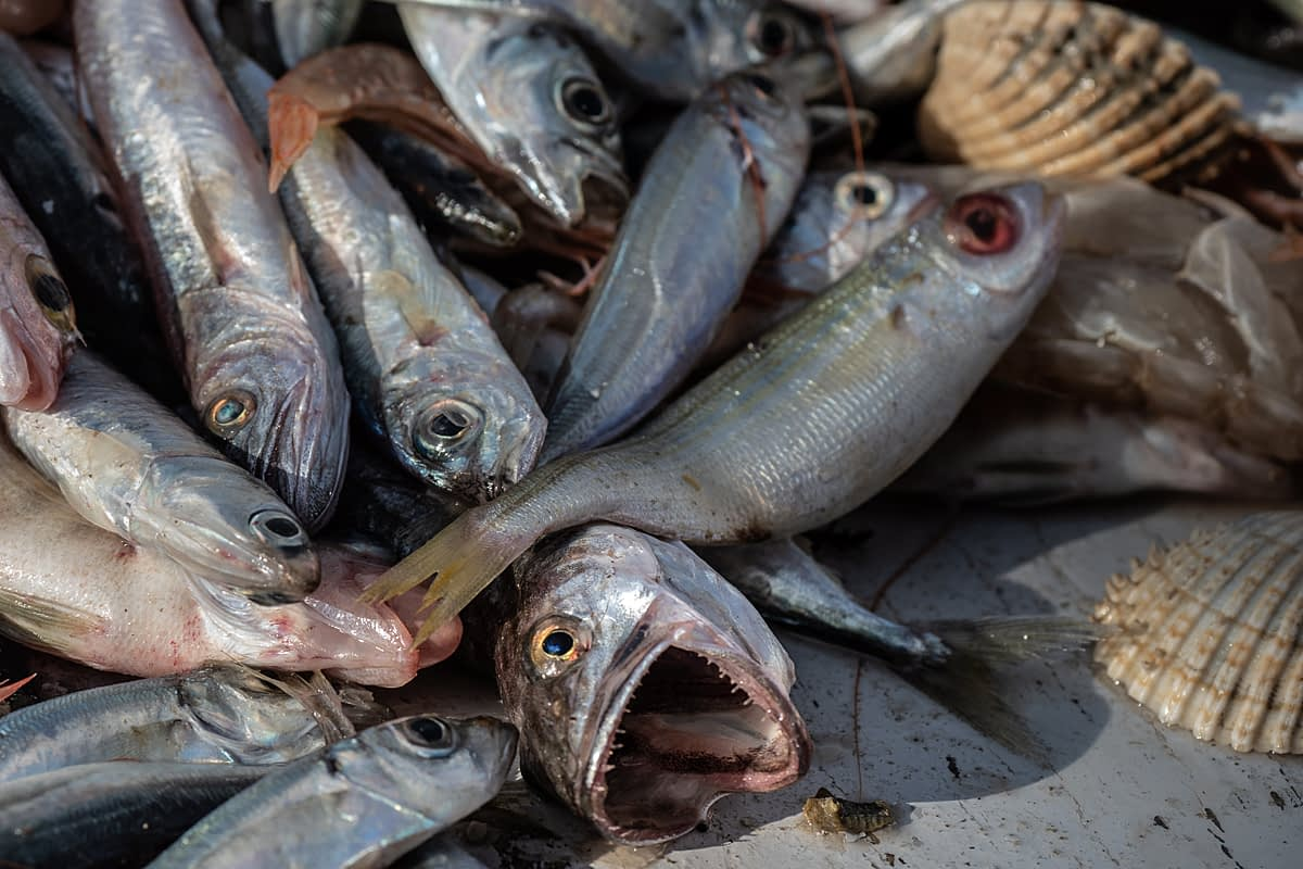 Detail of fish that have been emptied from nets onto the deck of the fishing boat Fasilis. Greece, 2020. Selene Magnolia / We Animals Media