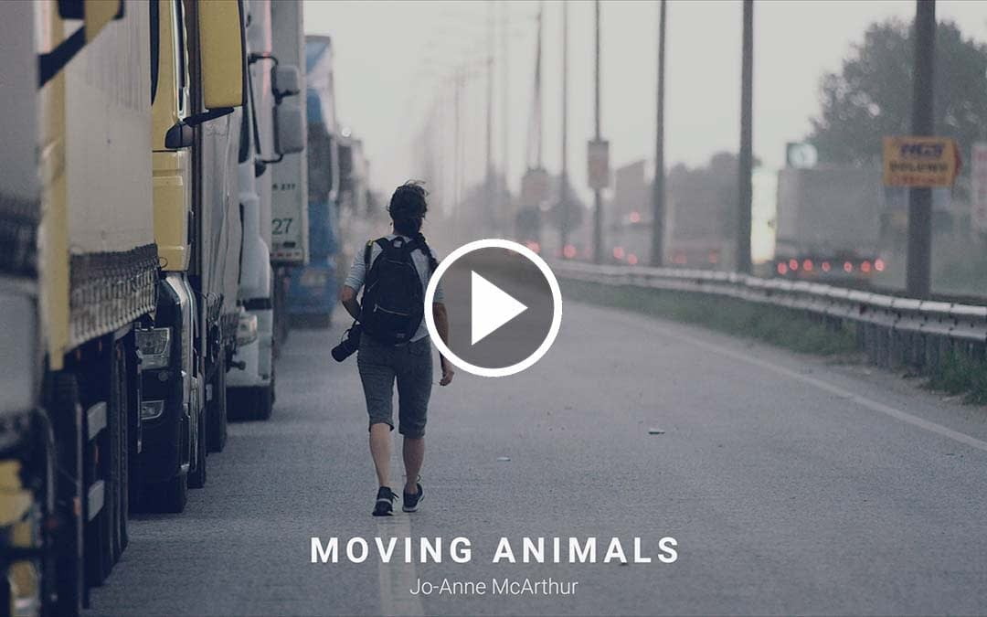In the Field: Moving Animals