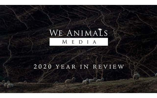 We Animals Media: 2020 Year In Review