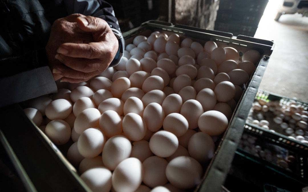 Eggs: The Unseen Story