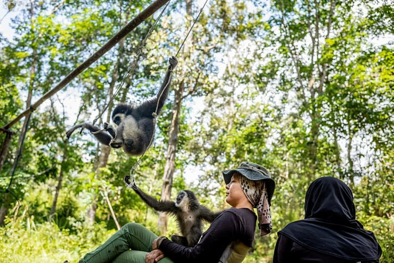 Bam and her team of volunteers look on as her infant gibbons play in the jungle at an undisclosed location in Malaysia, 2019. Justin Mott / Kindred Guardians Project / We Animals Media