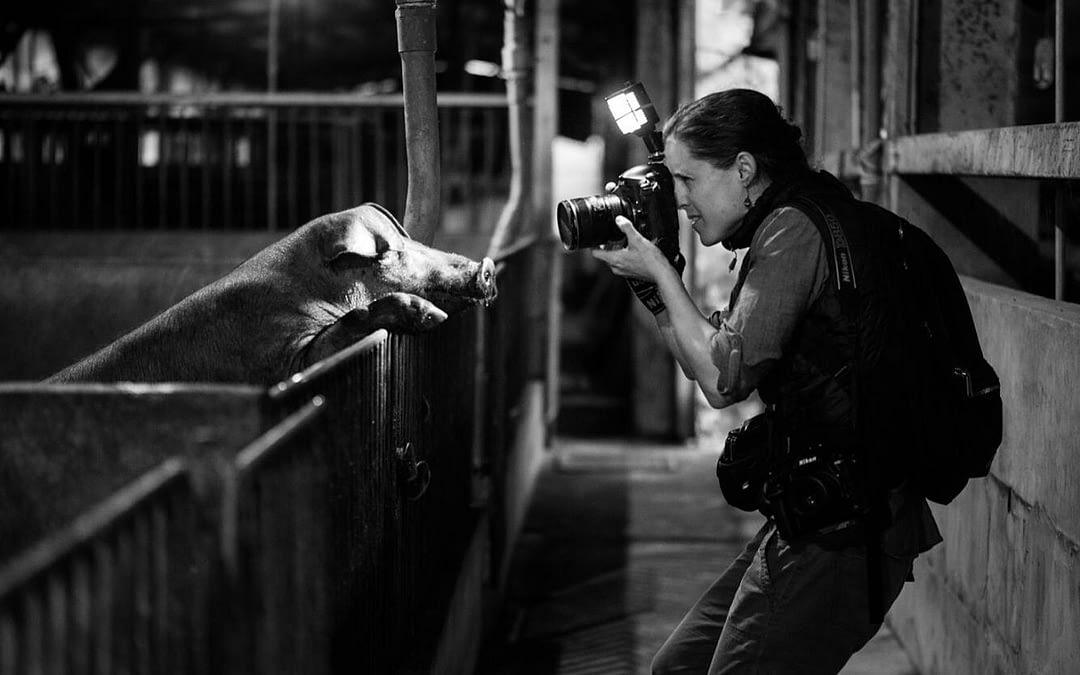 We Animals Media Launches Animal Photojournalism Fellowship