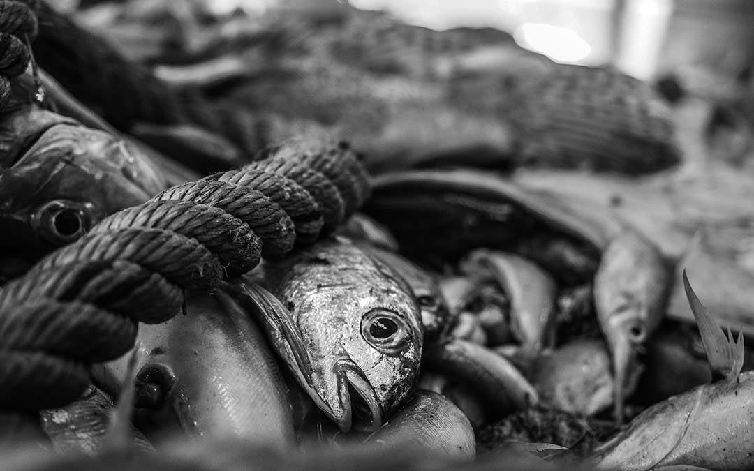 Mediterranean Aquaculture & Fishing
