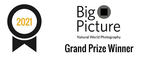 BigPicture Competition | Grand Prize Winner (2021)