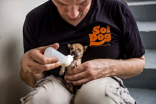 A German tourist hand feeds milk to a puppy he found abandoned at a temple in Phuket, Thailand. He brought the puppy to Soi Dog for sterilization. Thailand, 2019. Justin Mott / Kindred Guardians Project / We Animals Media