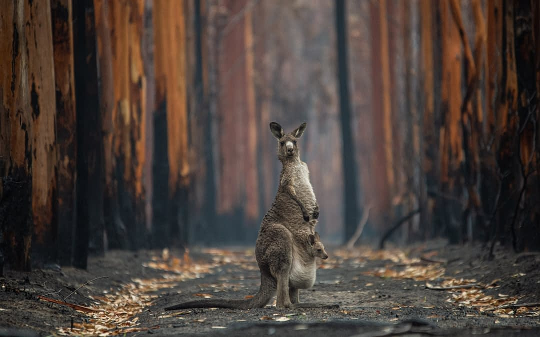 Disaster Response: How Australia Is Failing Its Wildlife